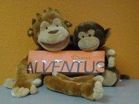 Alventus welcome