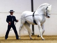 Doma del caballo blanco