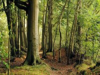 Los mejores bosques