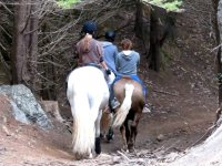 On horseback in Tenerife
