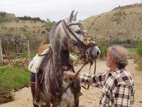 hombre observando un bello caballo