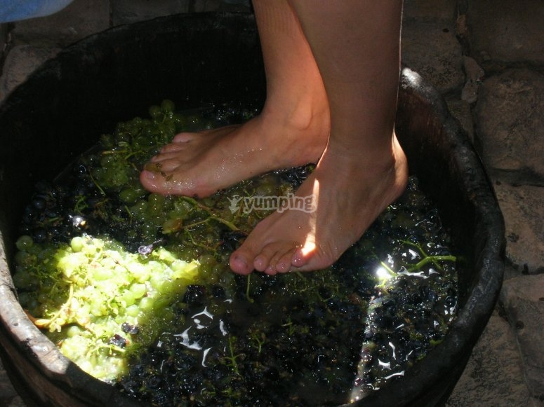 Elaborando el vino artesanalmente