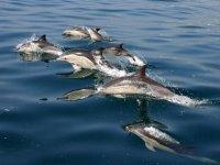 放松所有的舒适海豚
