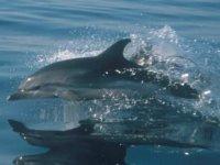 海豚将陪伴你