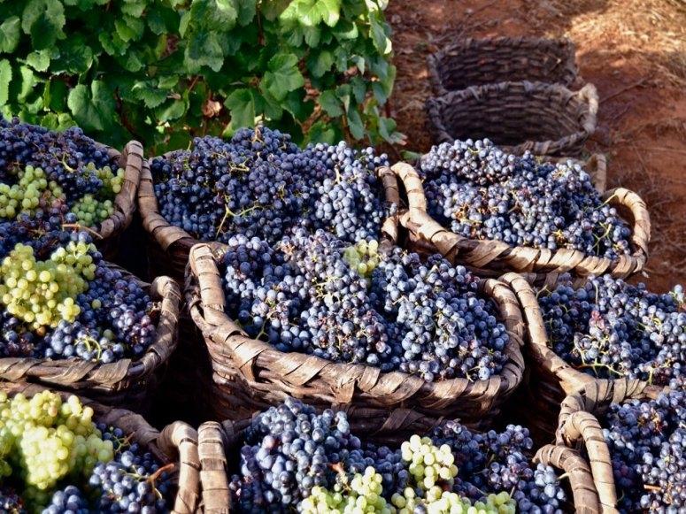 Grape selection