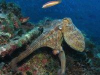 Cefalopodo en la Costa Brava