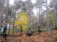 En camino del circuito arbóreo