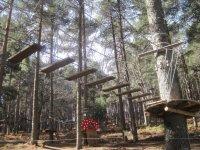 Parque de arborismo