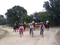 Cycling in front of the horses
