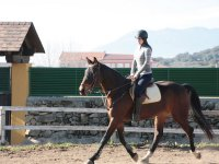 Trotting in the riding track