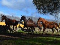 Ejemplares equinos