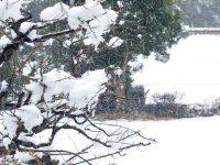 Durante la nevada