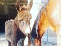 驴和他的朋友马