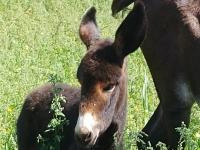 我们的草地上的驴
