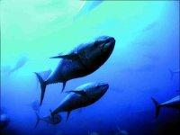 Especies pelagicas de gran tamaño
