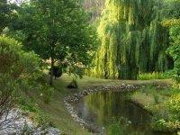río con arboles