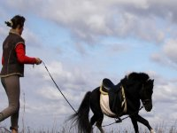 domando al pony
