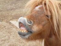 pony sonriendo
