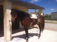 el caballo descansando al sol