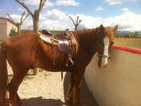 nuestro caballo colorado