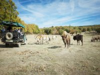 Safari en el Valle de Juarros