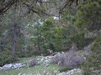 Ciervos en la ruta