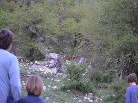 Observando la fauna