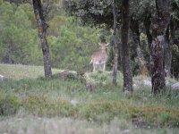 Senderismo y observacion de fauna