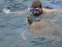 水下潜水与海龟潜水与标志