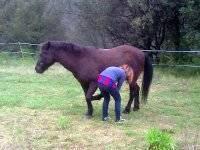 Bautizo Equestre