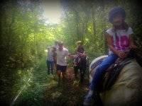 Paseo tranquilo por el bosque para toda la familia
