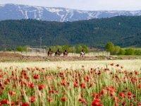 A caballo entre campos de amapolas
