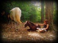Amamos los caballos