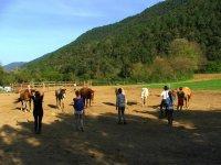 Trabajando la comunicacion con los caballos