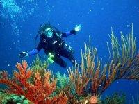 调查海洋植物