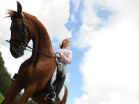 horse and blue sky