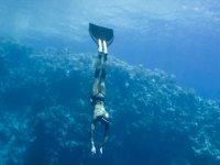 该地区的潜水