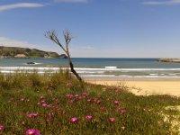 Playa cercana a la escuela de surf