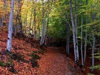 Senda entre hojas secas