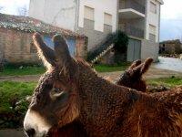 Actividades con burros