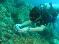 Cursos de fotografia subacuatica