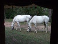 Escursioni con cavalli
