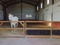 caballo en instalaciones