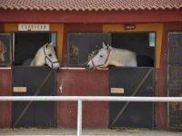 caballos en cuadras