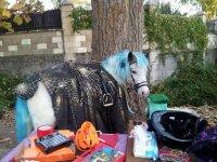 Pony preparado para nuestra fiesta de Halloween