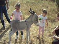 Brushing the little donkey