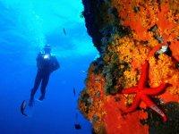 Espectaculares paisajes submarinos en Portugal