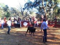 Recortando a la vaquilla en la plaza