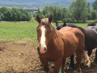 caballos en instalaciones