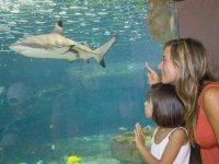 Viendo al tiburon